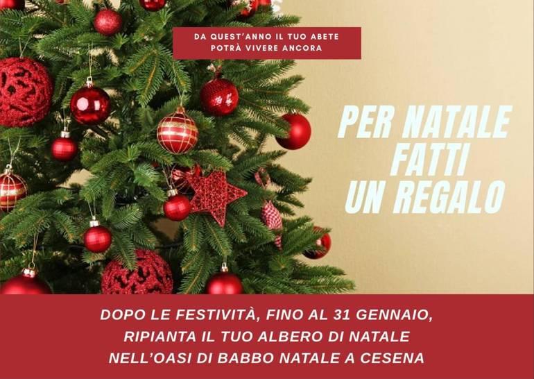 Immagini Dopo Natale.Arriva A Cesena L Oasi Di Babbo Natale Dove Ripiantare Gli