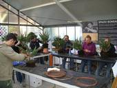 Bonsai 2018, un cesenate premiato al Congresso Ubi 2018
