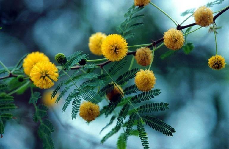 Festa della donna: quest'anno la mimosa cede il posto al rispetto